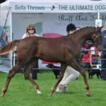 Elite Futurity scoring embryo transfer foals take further honours at Osberton
