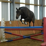 Top BEF Futurity eventing scorers include twins born by embryo transfer