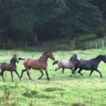 Warmblood Fragile Foal Syndrome (WFFS)