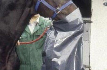 SCIENCE SUPPLEMENTS – Equine Respiratory Disease: Part 3. Diagnosis of common equine respiratory diseases