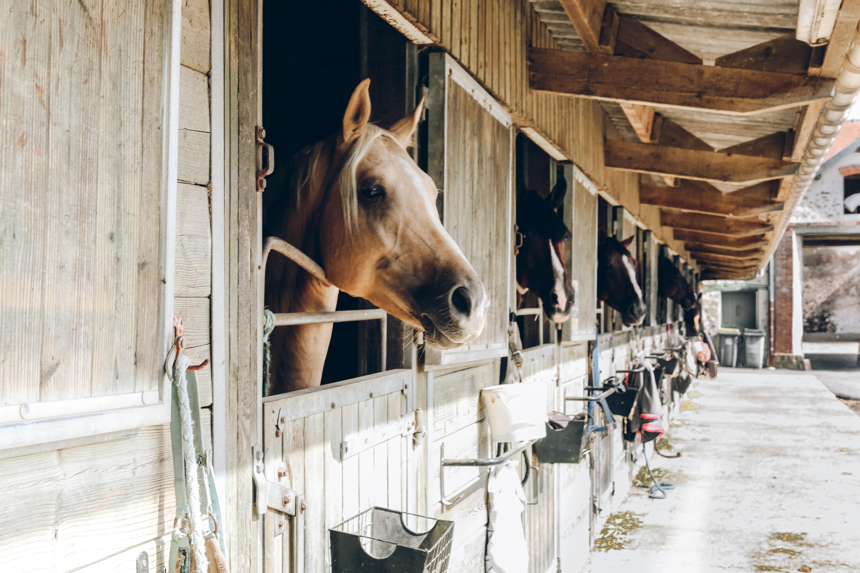 Coronavirus – caring for horses